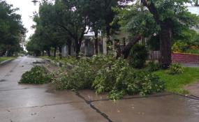Temporal de viento y lluvia causó problemas en Reconquista y la región. Cuánto llovió y todos los comunicados de la EPE actualizados hasta las 10:10 hs.