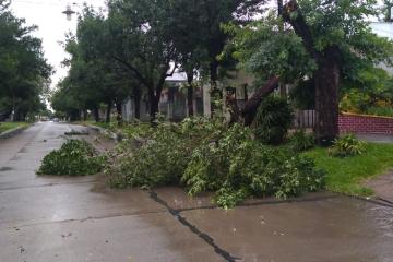 12122019 rama caída en Ludueña entre Colón y Sarmiento.jpeg