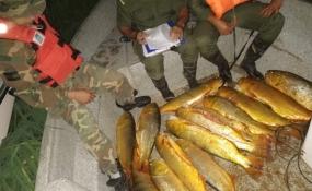 Personal de Prefectura y de la Guardia Rural Los Pumas  secuestraron armas y pescados de diferentes especies.