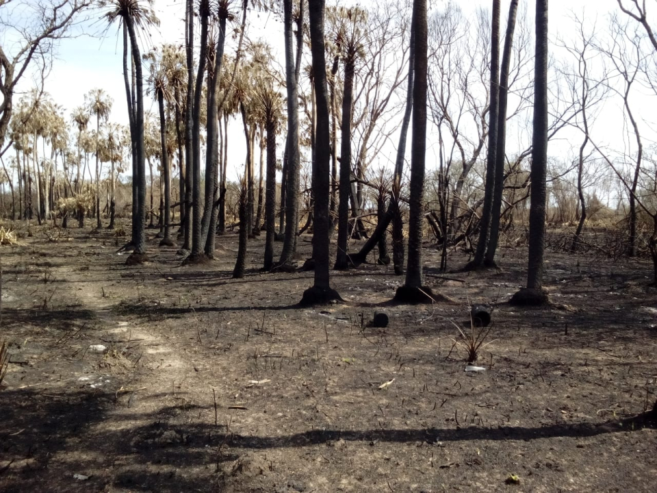 wingeyer colmenas para miel orgánica en Romang quemado todo b.jpg