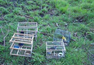 Secuestro de aves.