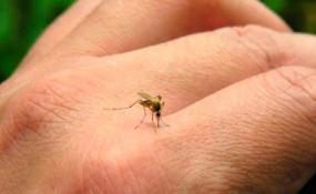 Según el informe epidemiológico hay 405 casos de dengue en la ciudad de Reconquista.