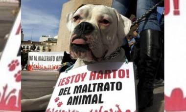 no al maltrato animal.jpg