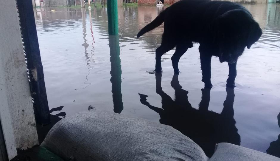 Estamos con el agua al cuello, nos llovió 190 milímetros, manifestó el presidente comunal de Los Amores, fotos y vídeo de los que ellos llaman catástrofe climática.