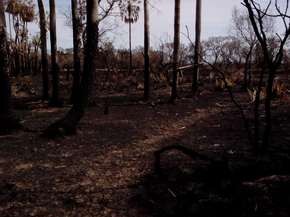 wingeyer colmenas para miel orgánica en Romang quemado todo.jpg