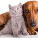 Este sábado continúa el plan de castración de mascotas