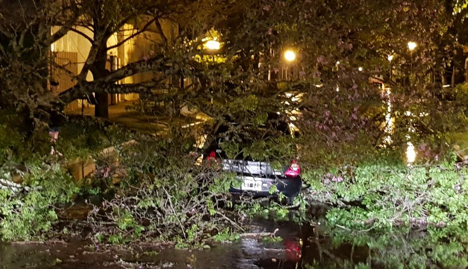 Viento, lluvia, caída de árboles y miles de vecinos sin energía en Reconquista y la región.