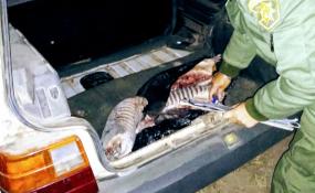 Los Pumas cuentan aquí sus últimos procedimientos en Romang, Vera, Calchaquí, La Gallareta y otras localidades de la provincia.