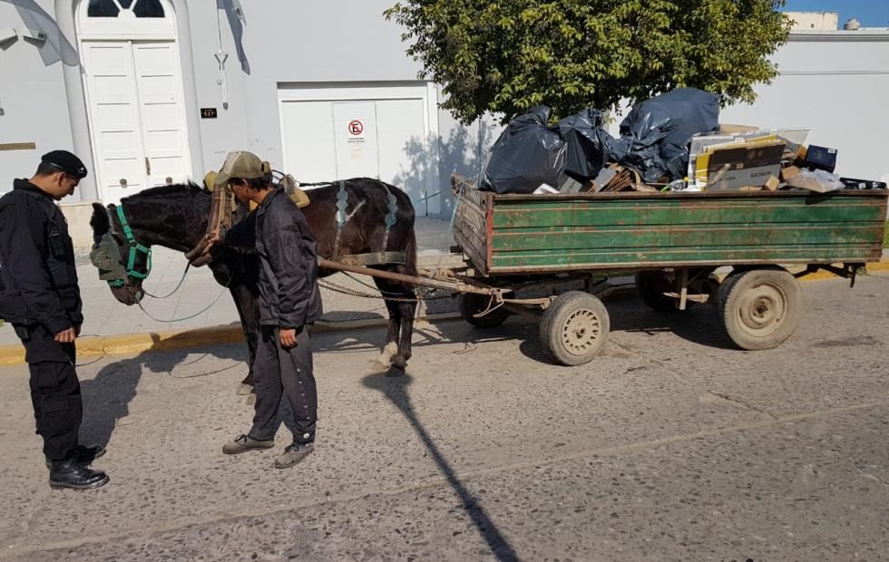 Vecinos denunciaron el maltrato a un caballo que tiraba de un carro.