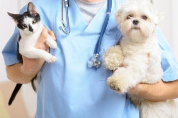 Vacunación perro y gatos.jpg