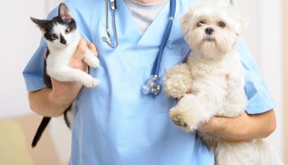 Castración de perros y gatos. El quirófano móvil de Avellaneda visitará Barrio Itatí este sábado