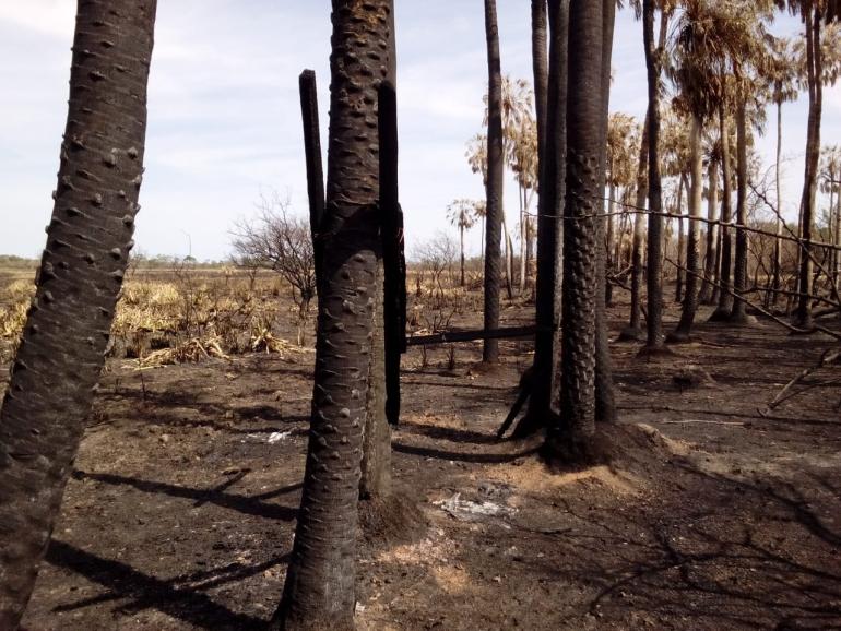 wingeyer colmenas para miel orgánica en Romang quemado todo c.jpg