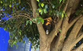 La policía encontró un taladro eléctrico escondido en un árbol. Si te lo robaron podes ir a reclamar.