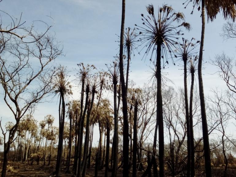 wingeyer colmenas para miel orgánica en Romang quemado todo d.jpg