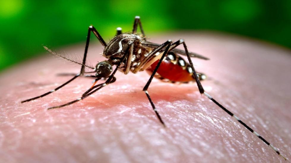 mosquito dengue.jpeg