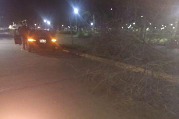 Cristian Ariel Luna choco borracho y tumbó árbol plaza 25 de mayo