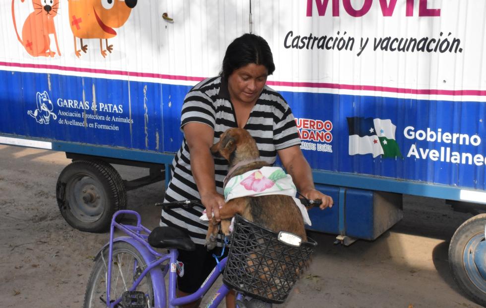 Cuidá tus mascotas, castralas! Dónde estará el quirofano móvil de Avellaneda este sábado.