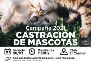 Este sábado comienza la castración de mascotas en Avellaneda.