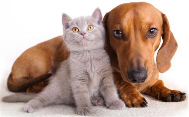 mascotas (Custom).jpg